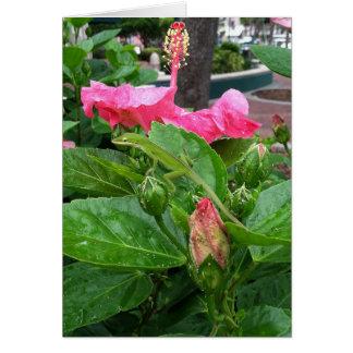 Cartão Lagarto camuflado abaixo da fotografia cor-de-rosa