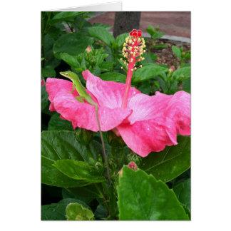 Cartão Lagarto de Anole na fotografia cor-de-rosa do