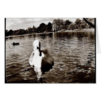 Cartão Lago swan