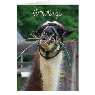 Cartão Lama Llunch, cumprimentos