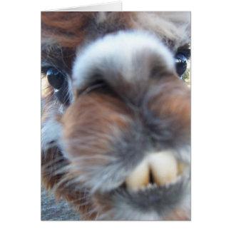 Cartão Lama Nerdy