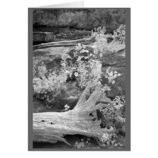Cartão Landcape em New Hampshire rural