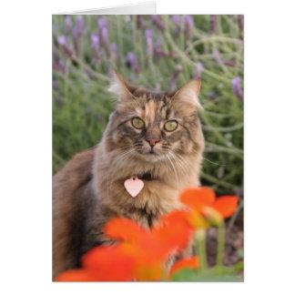 Cartão Lavendar, chagas, e um gato da concha de tartaruga
