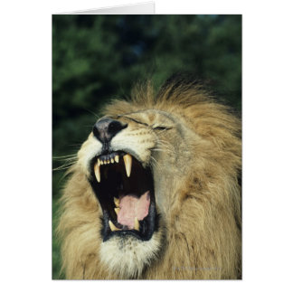 Cartão leão africano masculino Preto-maned que boceja