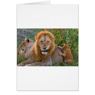 Cartão Leão Cub bonito que joga com pai, Kenya