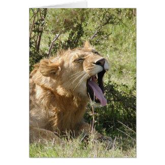Cartão Leão (dos Lions Clube) que boceja - Masai Mara