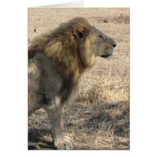 Cartão Leão masculino