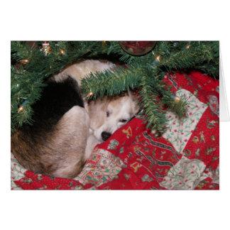 Cartão Lebreiro sonolento do Natal