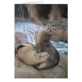 Cartão Leões de mar