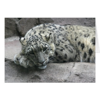 Cartão Leopardo sonolento