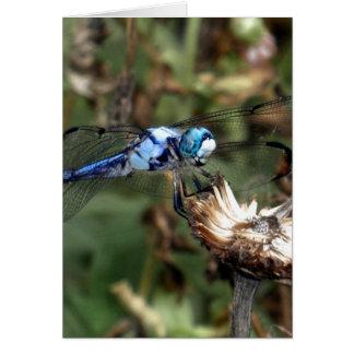 Cartão Libélula azul das libélulas em uma foto do Husk da