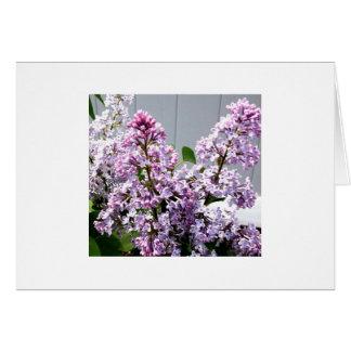 Cartão Lilacs
