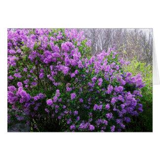 Cartão Lilacs no primavera