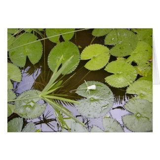 Cartão Lilypads luxúria