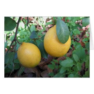 Cartão Limões de Myers