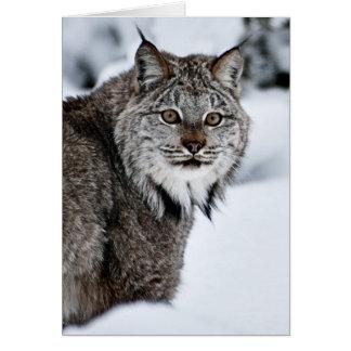 Cartão Lince canadense na neve