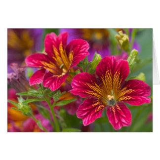 Cartão Língua pintada fim-UPS de suas flores -