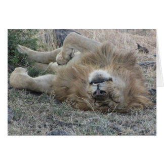 Cartão Lions Club, sono do leão (Masai Mara, Kenya)