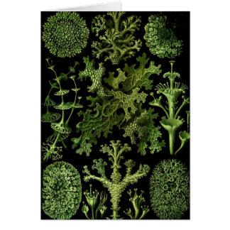 Cartão Líquenes verde e preto