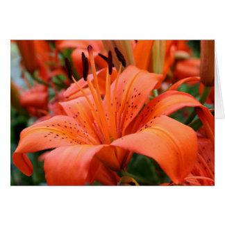 Cartão [Lírio de tigre das flores coloridas] - alguma