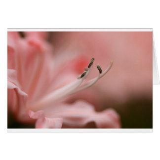 Cartão Lírio o rosa