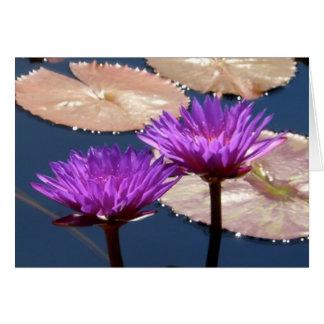 Cartão Lírios de água violetas