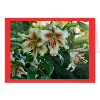 Cartão Lírios no jardim botânico de Missouri