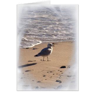 Cartão Lkes anda por muito tempo na praia…