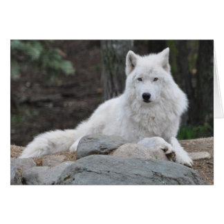 Cartão Lobo ártico