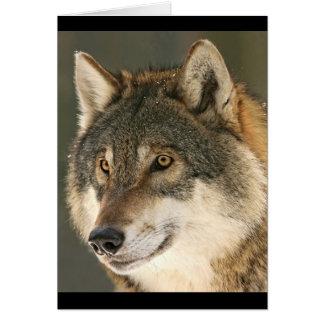 Cartão Lobo cinzento