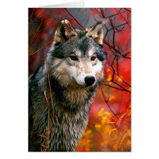 Cartão Lobo cinzento na folha vermelha e amarela bonita