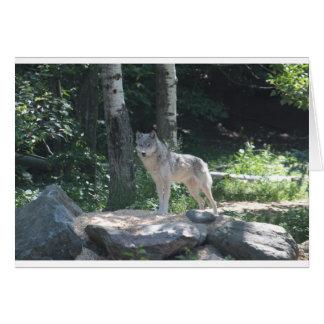 Cartão Lobo de madeira