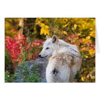 Cartão Lobo do outono
