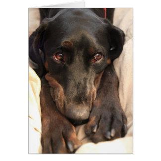 Cartão Loquaz o cão do salvamento (cartão vazio)