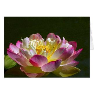 Cartão Lotus cor-de-rosa