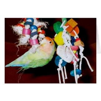 Cartão Lovebird no brinquedo