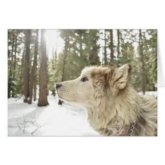 Cartão Lupercalia alegre (lobo)