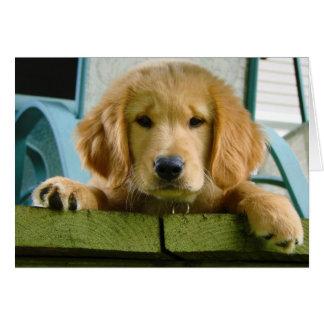Cartão Lúpus de Canis Familiaris do cão de filhote de
