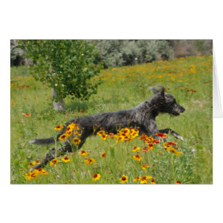 Cartão Lurcher que funciona através de um campo de flor -