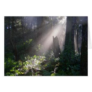Cartão Luz do sol da floresta de Gabriola