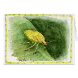 Cartão Luz - inseto verde do fedor