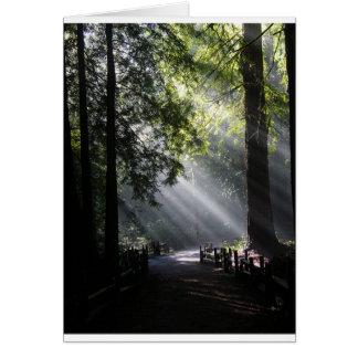 Cartão Luz solar através das árvores da sequóia vermelha