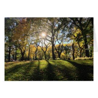 Cartão Luz solar no Central Park