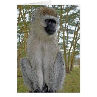 Cartão Macaco de Vervet