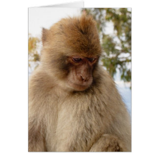 Cartão Macaco triste