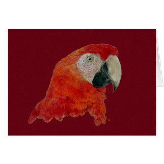 Cartão - Macaw