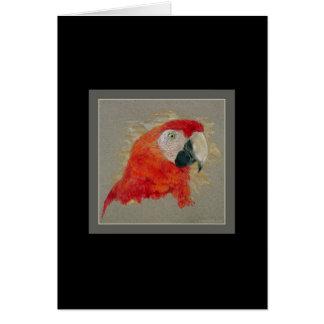 Cartão Macaw