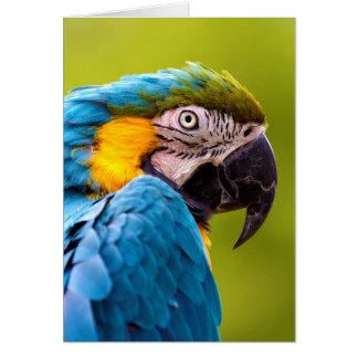 Cartão Macaw azul e amarelo (ararauna do Ara)