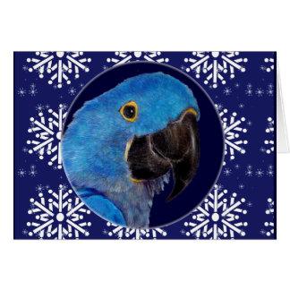 Cartão - Macaw decorativo do jacinto do feriado