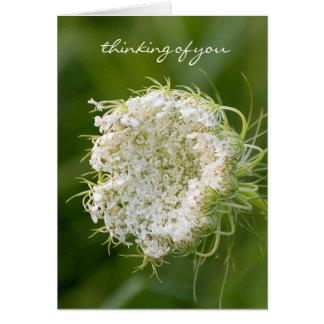 Cartão Macro do laço da rainha Anne